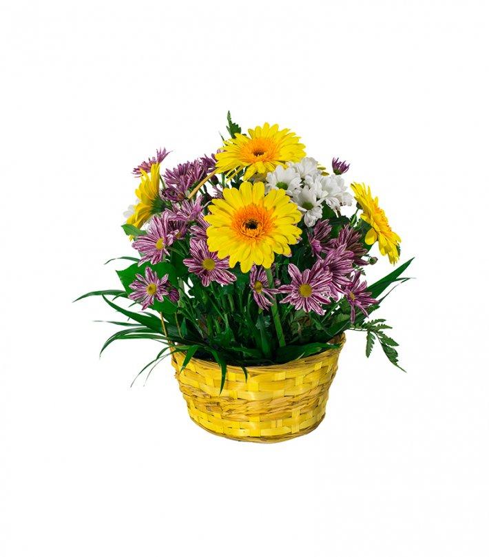 סלסלת פרחים - גרברות וחרציות